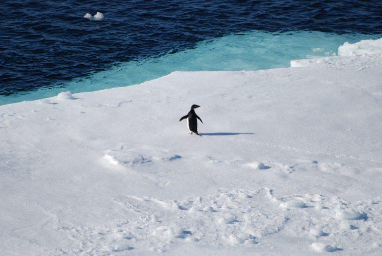 Oceano Antártico_© José Xavier
